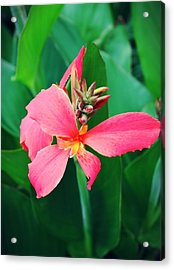 Pink Bloom Acrylic Print by Cathie Tyler