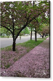 Acrylic Print featuring the photograph Pink Bloom  by Christina Verdgeline