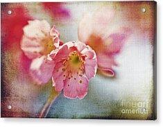 Pink Blossom Acrylic Print by Scott Pellegrin