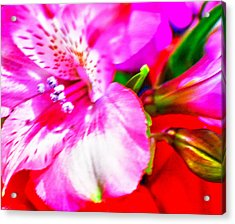Pink Bouquet Acrylic Print