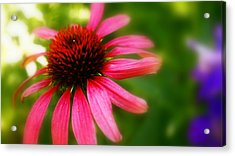Pink Burst Of Color Acrylic Print by Alexandra  Rampolla