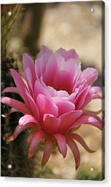 Acrylic Print featuring the photograph Pink Cactus by Tammy Espino