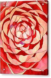 Pink Camellia Macro Acrylic Print by Sacha Grossel