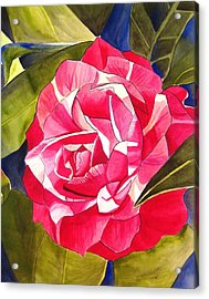 Pink Camellia Acrylic Print by Sacha Grossel