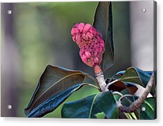 Pink Candle Acrylic Print by Judith Russell-Tooth