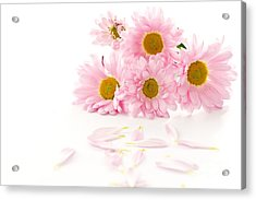 Pink Chrysanthemums Beautiful Acrylic Print by Boon Mee