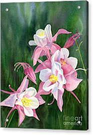 Pink Columbine Blossoms Acrylic Print by Sharon Freeman