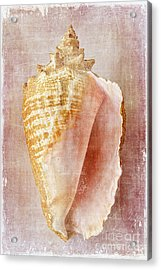 Pink Conch Acrylic Print
