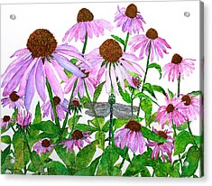 Pink Cone Flowers And Dragonfly Acrylic Print