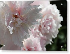 Pink Confection Acrylic Print by Ruth Kamenev