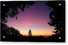 Pink Contrails Acrylic Print by Tom Mansfield