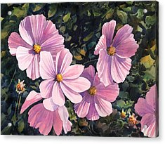 Pink Cosmos Acrylic Print by Anthony Forster