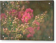 Pink Crepe Myrtle Acrylic Print by Suzanne Powers