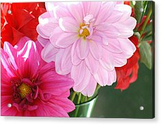 Acrylic Print featuring the photograph Pink Dahlias In The Morning by Lehua Pekelo-Stearns