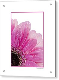 Pink Daisy Petals Acrylic Print