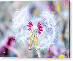 Magic In Pink Acrylic Print