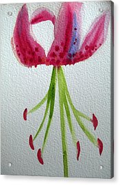 Pink Day Lily Acrylic Print by Sacha Grossel