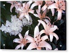 Pink Daylilies Acrylic Print
