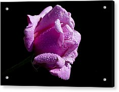 Acrylic Print featuring the photograph Pink Delight by Doug Norkum