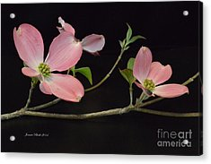 Acrylic Print featuring the photograph Pink Dogwood Branch  by Jeannie Rhode