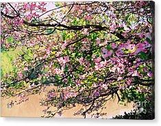 Pink Dogwood I Acrylic Print