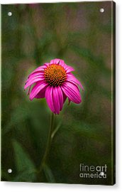 Pink Echinacea Digital Flower Photo.painting Composite Artwork By Omaste Witkowski Acrylic Print by Omaste Witkowski