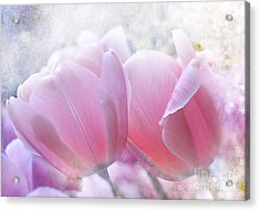 Pink  Acrylic Print by Elaine Manley