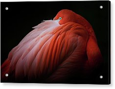 Pink Flamingo Acrylic Print by Billy Currie Photography