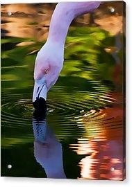 Pink Flamingo Reflection Acrylic Print