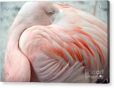 Acrylic Print featuring the photograph Pink Flamingo II by Robert Meanor