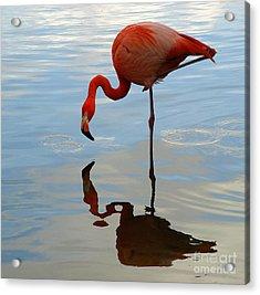 Pink Flamingo   Acrylic Print by Raymond Earley