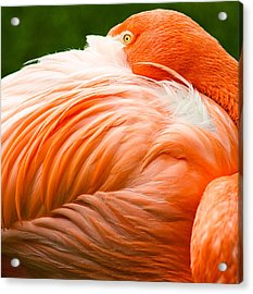 Pink Flamingo Acrylic Print by Viacheslav Savitskiy
