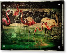 Pink Flamingos - Shangri-la Acrylic Print by Absinthe Art By Michelle LeAnn Scott