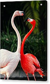 Pink Flamingos - Who's The Boss? Acrylic Print