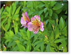 Acrylic Print featuring the photograph Pink Flower by Alex King