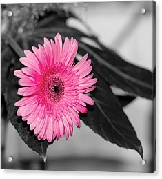 Pink Flower Acrylic Print by Amr Miqdadi