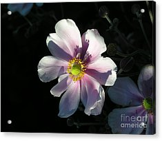 Pink Flower Acrylic Print by Bev Conover