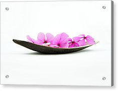 Pink Flower Boat Acrylic Print by Aged Pixel
