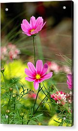 Pink Flower Acrylic Print by Ed Roberts