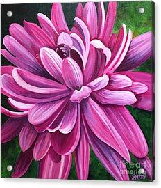 Pink Flower Fluff Acrylic Print by Debbie Hart