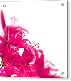 Pink Flower Frames Acrylic Print by Boon Mee