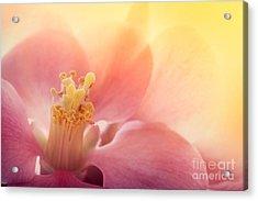 Pink Flower Macro Acrylic Print by Mythja  Photography