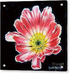 Pink Flower Painting Oil On Canvas Acrylic Print by Drinka Mercep