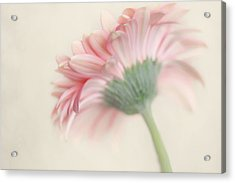Pink Flower Photography - Pink Nursery Wall Art - Baby Girl Nursery Art - Pale Pink Mint Green Decor Acrylic Print by Amy Tyler