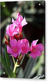 Acrylic Print featuring the photograph Pink Flower  by Ramabhadran Thirupattur