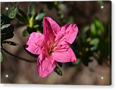 Acrylic Print featuring the photograph Pink Flower by Tara Potts