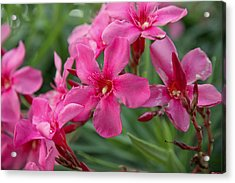 Pink Flowers Acrylic Print by Dave Dos Santos