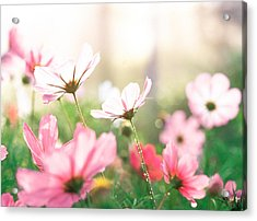 Pink Flowers In Meadow Acrylic Print