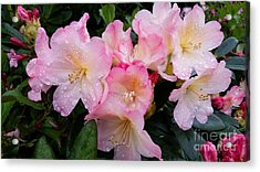 Acrylic Print featuring the photograph Pink Flowers by Rose Wang