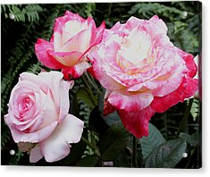 Acrylic Print featuring the photograph Pink Garden Roses by James C Thomas